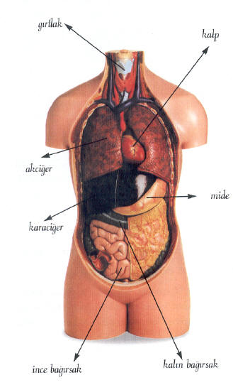 очистить желудок от паразитов